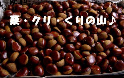 加満田庭園の栗が採れました_e0234016_2023091.jpg