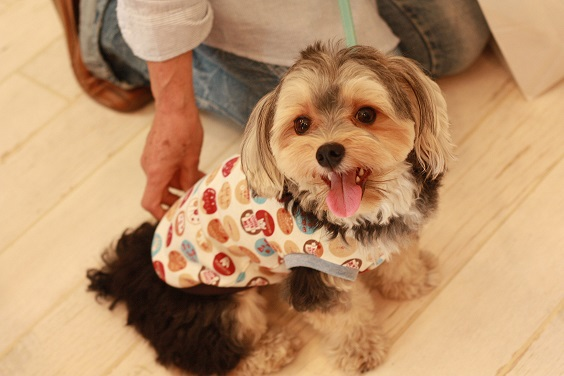 NICE DOG マルシェ♪2_b0174042_2056696.jpg