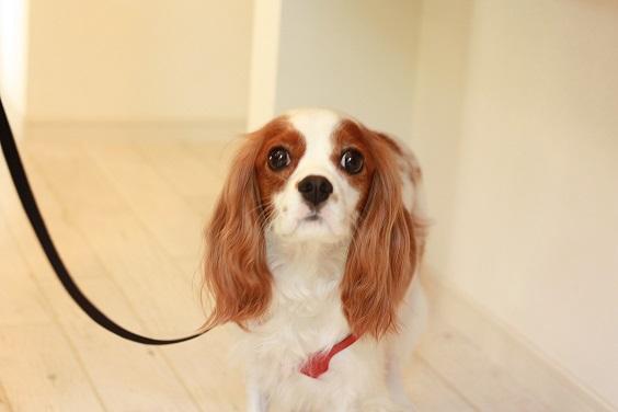 NICE DOG マルシェ♪2_b0174042_20584447.jpg