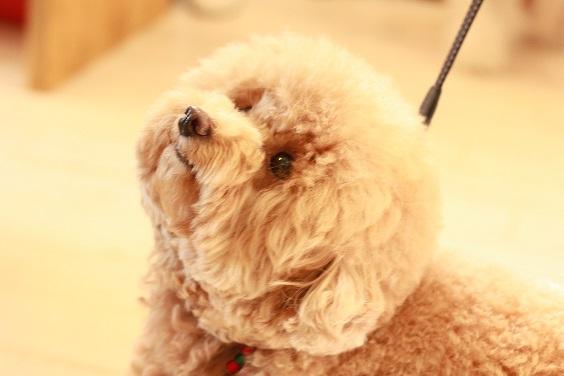 NICE DOG マルシェ♪2_b0174042_20591119.jpg