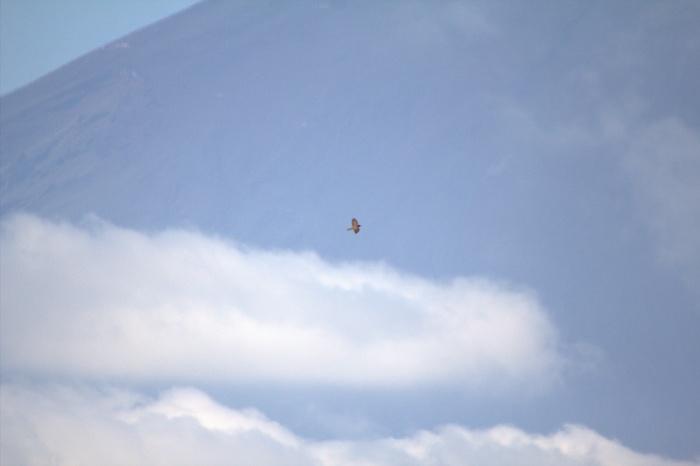 2013.9.29 矢倉岳・鷹の渡り・サシバ、ハチクマ、ハイタカ、ツミ、ミサゴ、クマタカ、ノスリ_c0269342_17524037.jpg