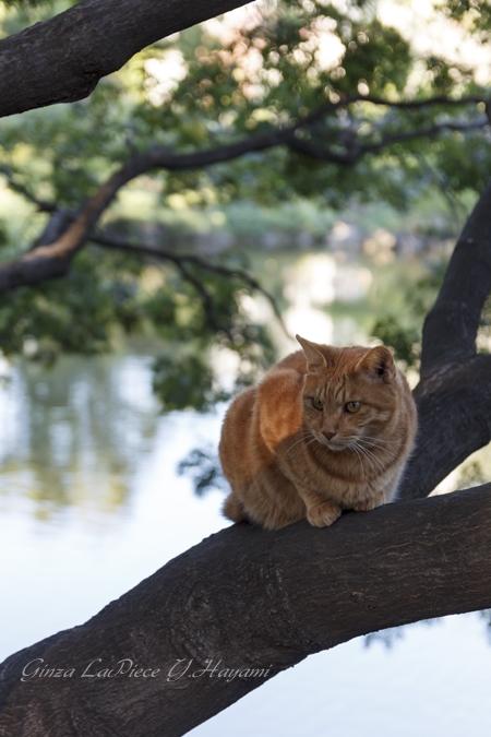 猫のいる風景 日比谷公園のチャッピーちゃん_b0133053_2131977.jpg