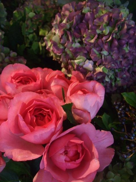 オークリーフ(秋色紫陽花、そしてコスモス)_f0049672_1652116.jpg