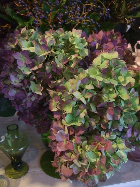 オークリーフ(秋色紫陽花、そしてコスモス)_f0049672_1655722.jpg
