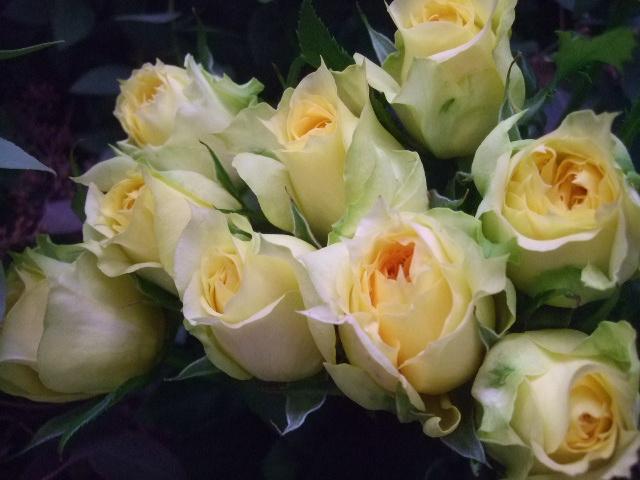 オークリーフ(秋色紫陽花、そしてコスモス)_f0049672_1661596.jpg