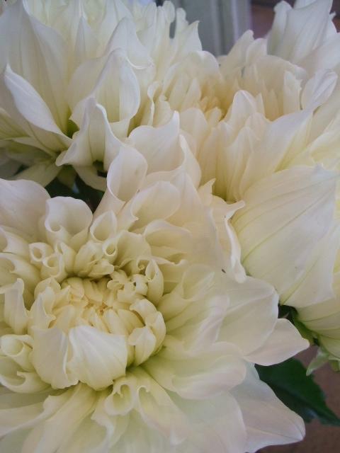 オークリーフ(秋色紫陽花、そしてコスモス)_f0049672_1663293.jpg