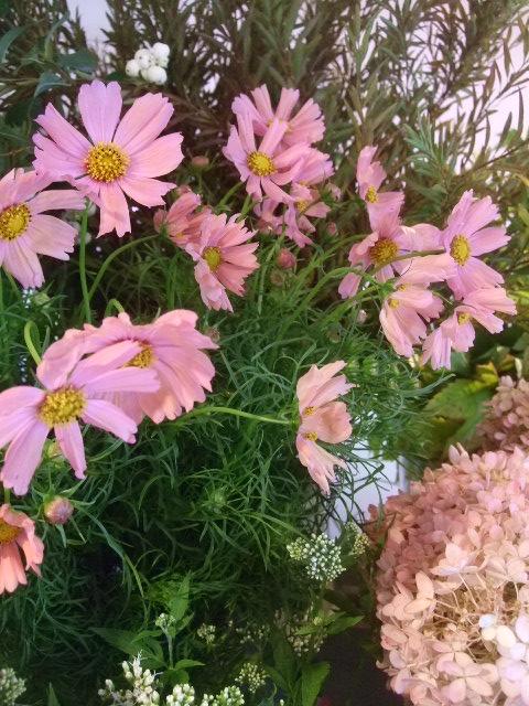 オークリーフ(秋色紫陽花、そしてコスモス)_f0049672_167327.jpg