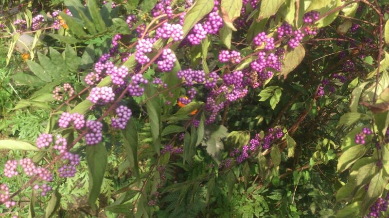 秋の花_d0182179_18505135.jpg
