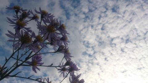 秋の花_d0182179_1918298.jpg