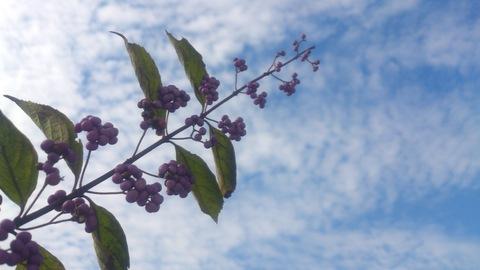秋の花_d0182179_19203785.jpg