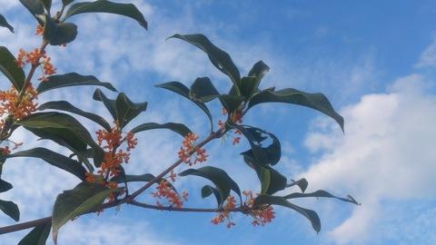 秋の花_d0182179_1921974.jpg