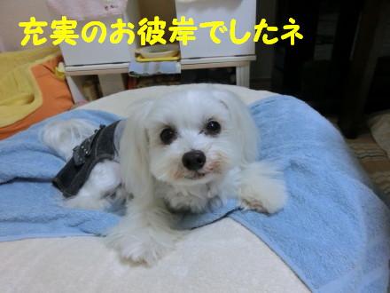 b0193480_2072543.jpg