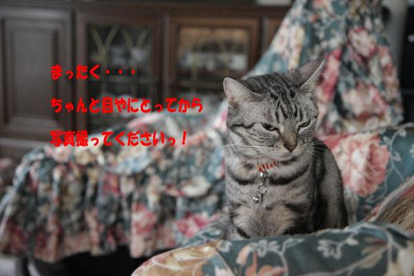 d0058182_16393229.jpg