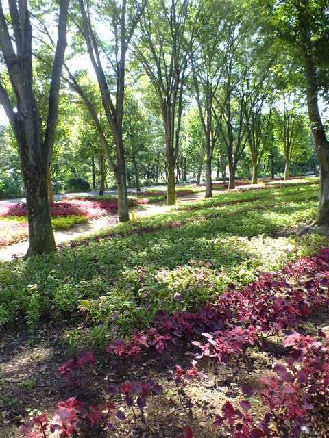 9月28日 武蔵丘陵森林公園 その1_e0145782_16271567.jpg
