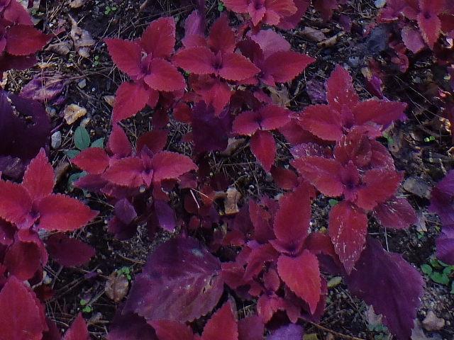 9月28日 武蔵丘陵森林公園 その1_e0145782_16292244.jpg
