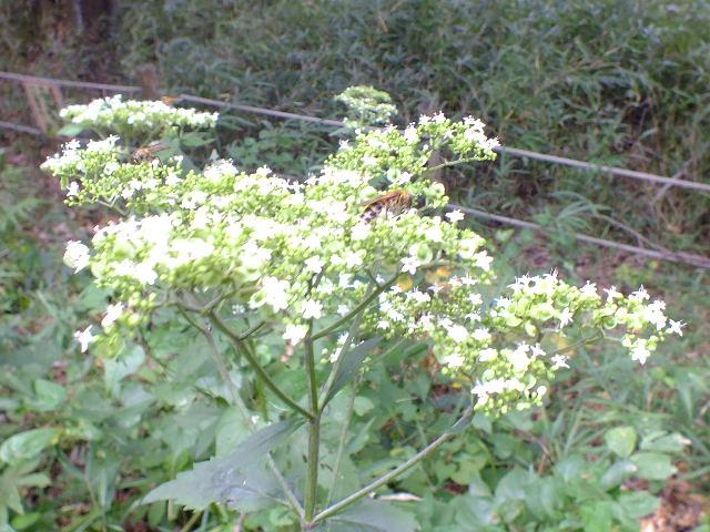 9月28日 武蔵丘陵森林公園 その1_e0145782_1632111.jpg