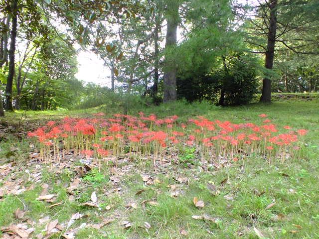 9月28日 武蔵丘陵森林公園 その1_e0145782_1632401.jpg
