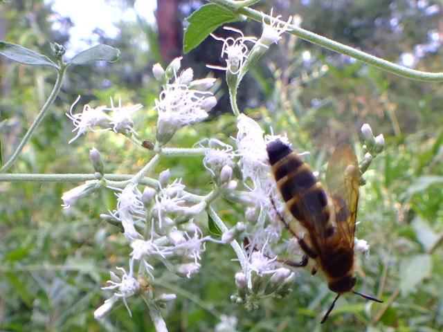 9月28日 武蔵丘陵森林公園 その1_e0145782_1638517.jpg