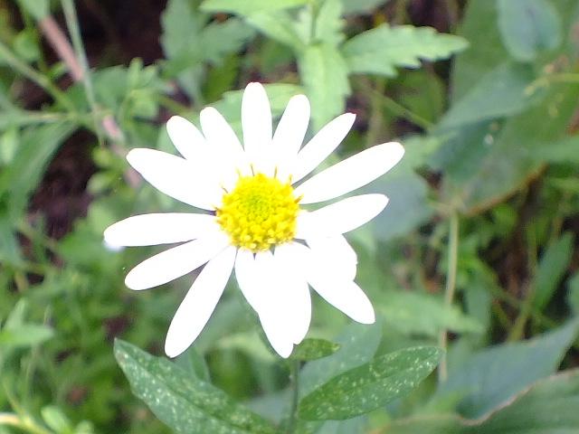 9月28日 武蔵丘陵森林公園 その1_e0145782_16392543.jpg