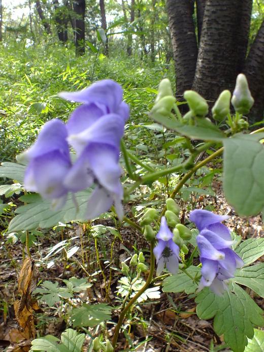 9月28日 武蔵丘陵森林公園 その1_e0145782_1640099.jpg