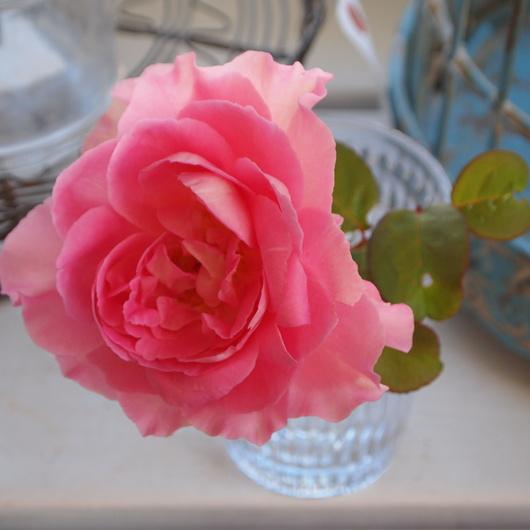お店にお花を飾る。_a0292194_18494691.jpg