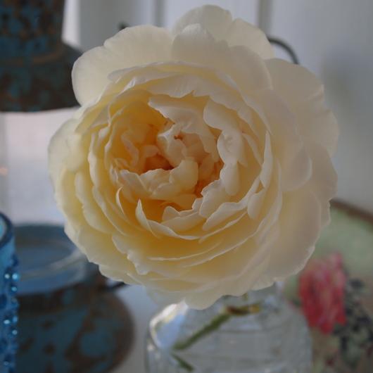 お店にお花を飾る。_a0292194_18502764.jpg