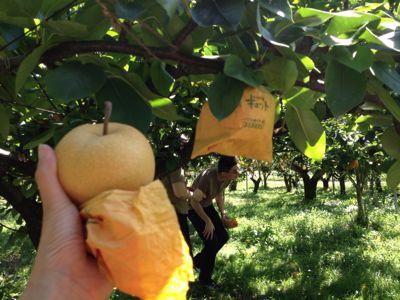 梨狩りツー いい天気!_e0101203_15584573.jpg