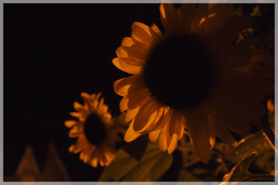 R50の夜_e0235910_8442785.jpg