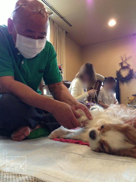 「愛犬の為の整体教室」について_c0099133_14584162.jpg