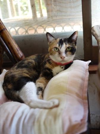 猫のお友だち パピちゃんクロッチちゃん編。_a0143140_21332477.jpg