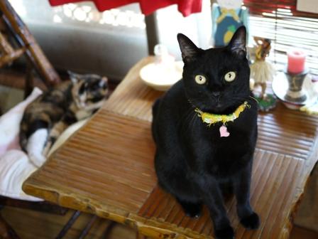 猫のお友だち パピちゃんクロッチちゃん編。_a0143140_2134387.jpg