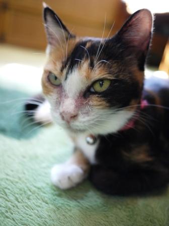 猫のお友だち パピちゃんクロッチちゃん編。_a0143140_21363436.jpg