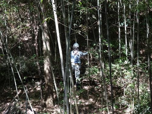 孝子の竹林でボランティア合流作業・・・第2回目_c0108460_21345778.jpg