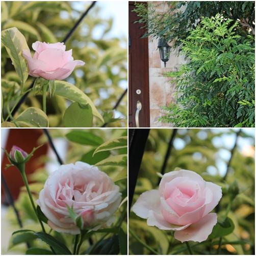 お庭のかわいこちゃん_e0236480_18193045.jpg