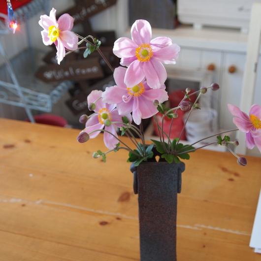 秋のお花、秋明菊_a0292194_1521359.jpg
