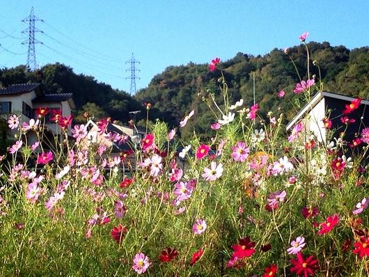 爽やかな朝\(^o^)/一日の始まりは愛犬との散歩から♪_a0213806_8561052.jpg