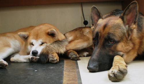 愛犬、愛猫の懐かしい画像に救われる_d0290407_14261641.jpg