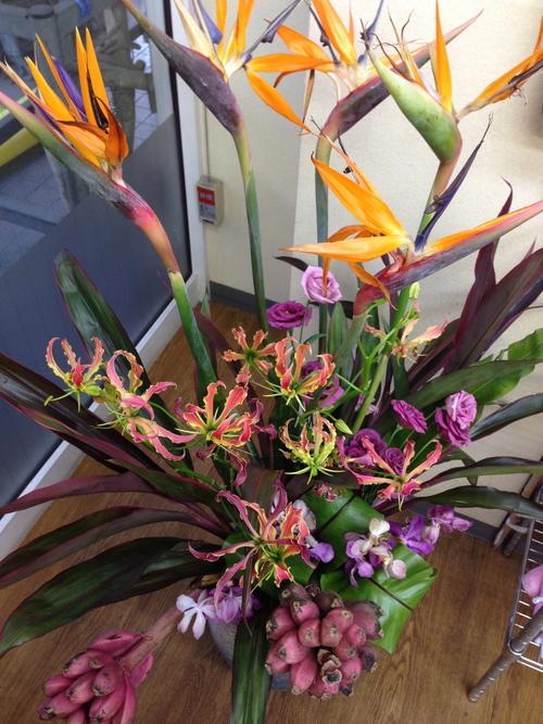 今週のお花とセール情報_a0200423_144565.jpg