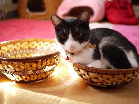 かごいっぱい猫 みるきぃ編。_a0143140_1914011.jpg