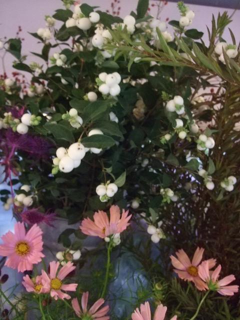 オークリーフ(桃色の秋明菊)_f0049672_1853765.jpg
