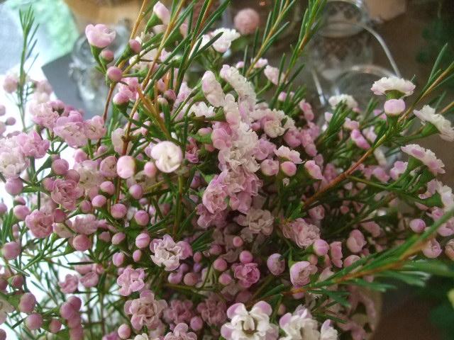 オークリーフ(桃色の秋明菊)_f0049672_1861671.jpg