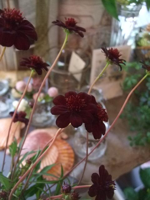オークリーフ(桃色の秋明菊)_f0049672_186753.jpg