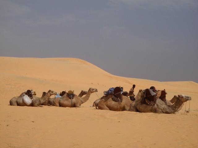 砂漠へGO!②_b0207873_7532243.jpg