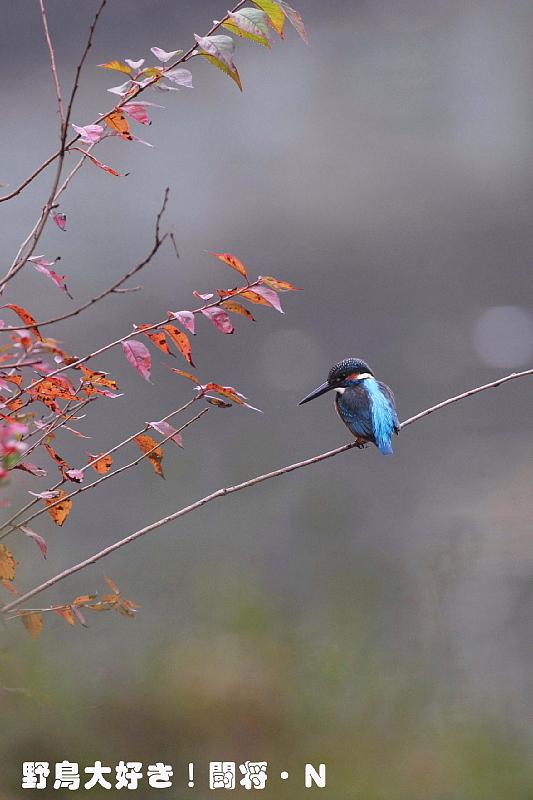 秋色に染まり_f0059882_15183564.jpg