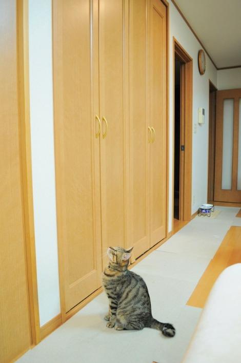 猫vs虫vs人間_a0126590_22141638.jpg