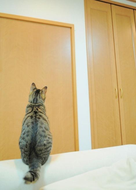 猫vs虫vs人間_a0126590_221579.jpg