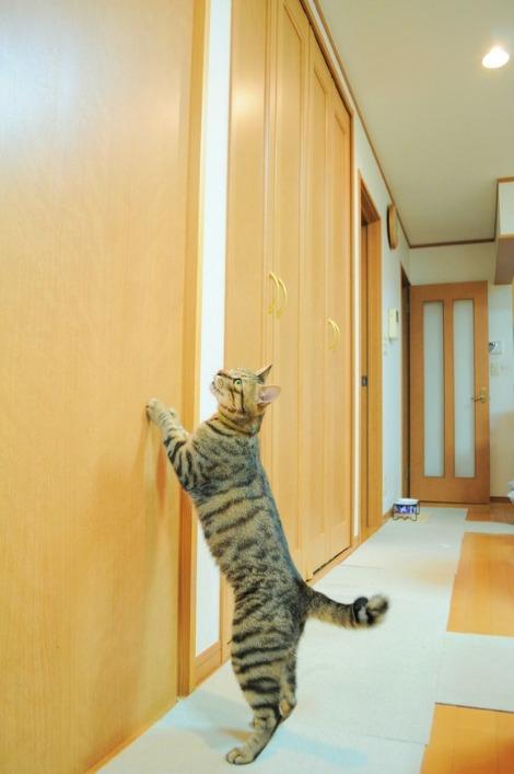 猫vs虫vs人間_a0126590_2216224.jpg