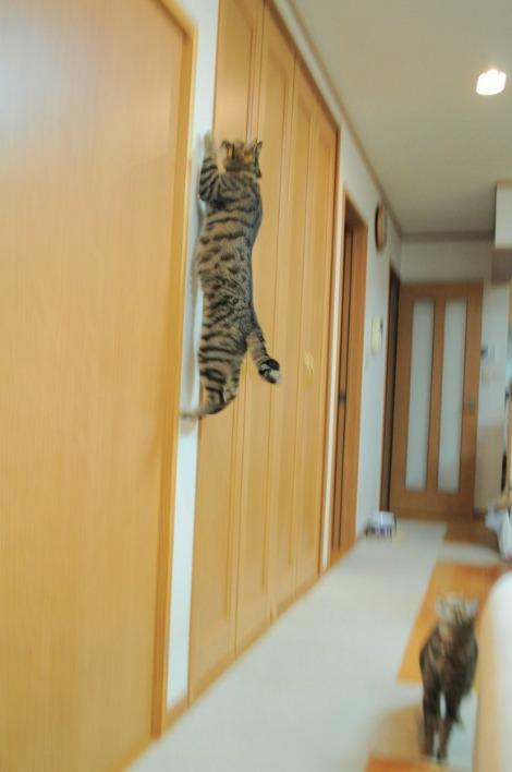 猫vs虫vs人間_a0126590_22241388.jpg