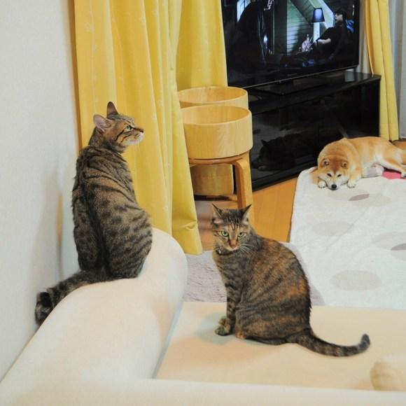 猫vs虫vs人間_a0126590_2310458.jpg