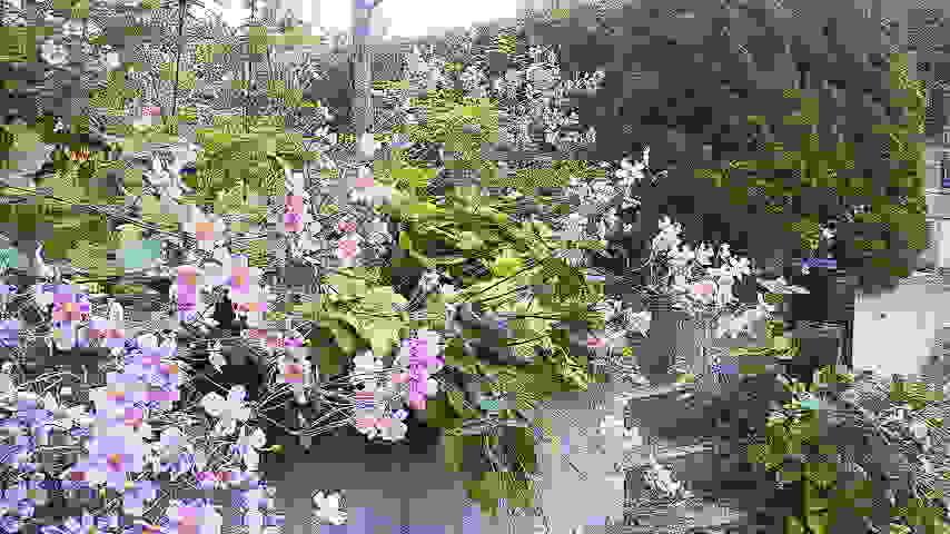 f0157414_1510149.jpg